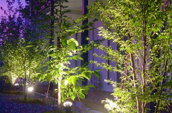 植栽ライトアップ